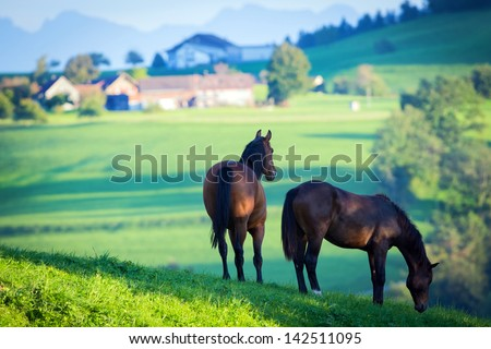 Two Horses In Field And Mountains.