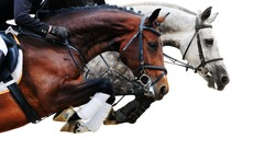 Two horses in jumping show, on white background isolated