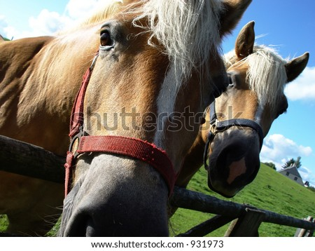 two horses in summer out at feed