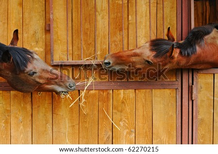Two horses in the stable - stock photo