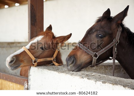 Two horses in the stable. Horizontal photo with natural light and colors