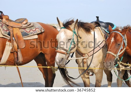 Two horses in the summer looking sad (focus on the center horse), Image show horse raise splays.