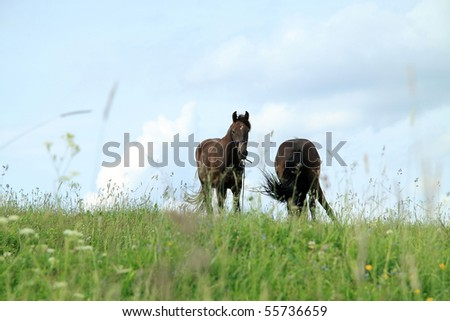 Two horses in the summer pasture.