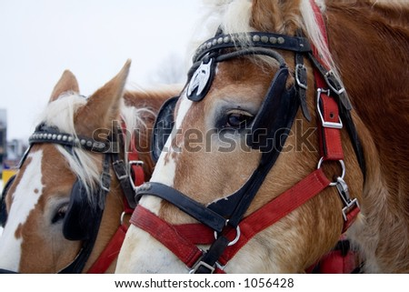 two horses in the winter looking sad (focus on the first horse)