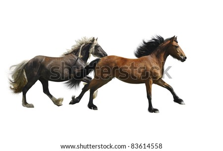 Two horses, irish cob and appazon females,running, on the white background