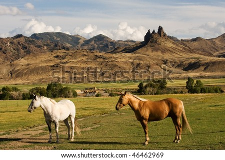 Two horses on the ranch in rural Wyoming