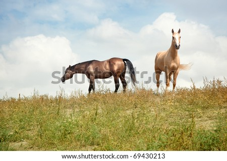 Two horses outdoors. Natural light and colors. Kazakhstan