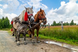 Two horses pulling a cart on a county road in Romania