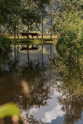 two horses reflected in the water of a lake
