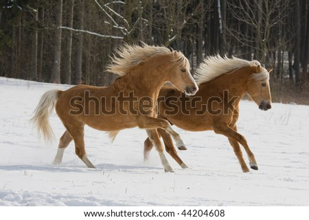 Two horses running through snowy landscape