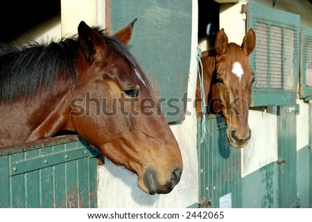 Two horses with the head outside of the stable.
