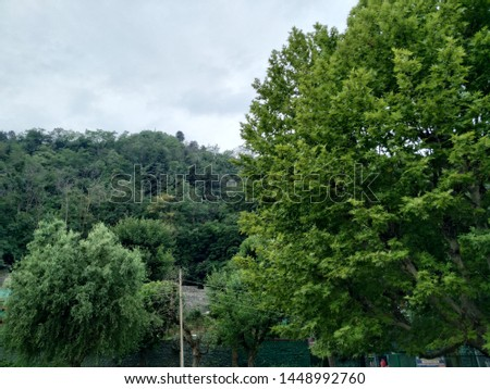 Two huge green trees in the foreground and a hillock with green trees in the background. Layers of greenery over greenery. #1448992760
