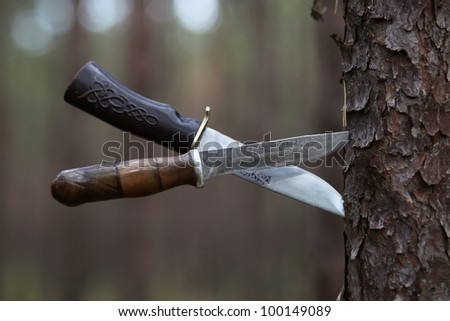 Two hunting knifes thrust a pine