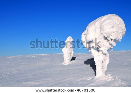 Two ice-covered trees on top of a mountain in Arctic Lapland