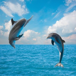 two  jumping dolphins,beautiful seascape with deep  ocean  waters and cloudscape