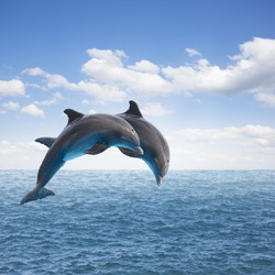 two jumping dolphins, seascape with deep  ocean  waters and cloudscape