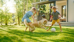 Two Kids Have fun with Their Handsome Golden Retriever Dog on the Backyard Lawn. They Pet, Play, Tackle it on the Ground And Scratch. Happy Dog Holds Toy Football in Jaws. Suburb House in the Summer