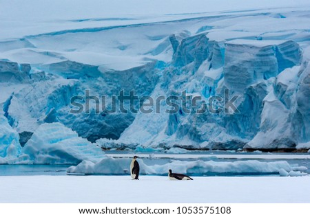 Two king penguins in front of a glacier in the background