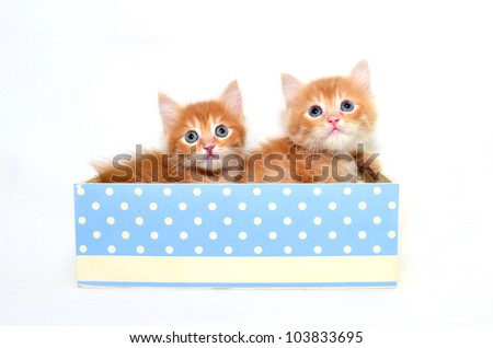 two kitten in box