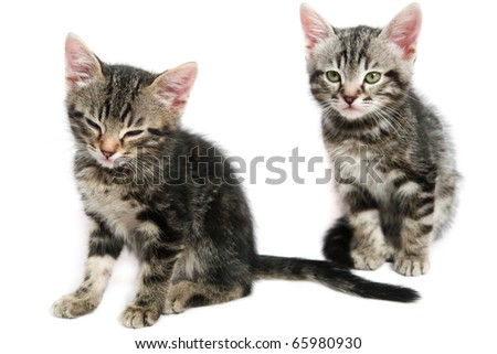 Two kitten - isolated