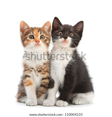 Two kitten sitting isolated on white