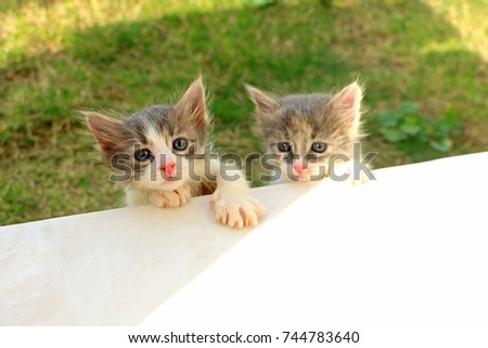 two kittens #744783640