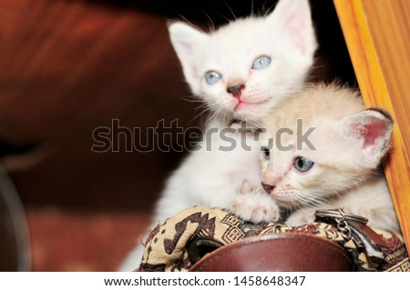 Two kittens,embracing each with cute and cute.