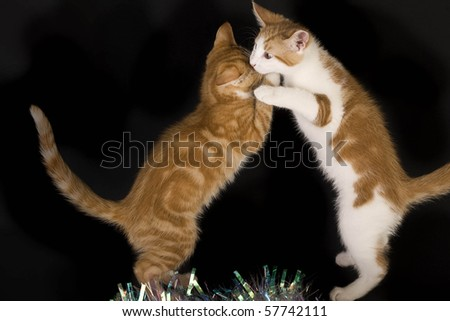 2+Kittens+Fighting
