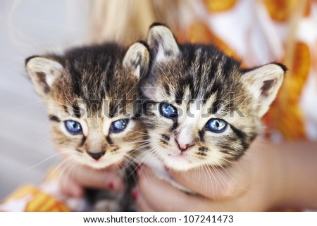 Two kittens held by person