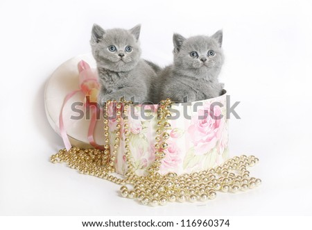 Two kittens in a box with a beads