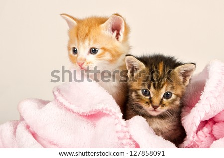 Two kittens in a pink blanket snug and safe