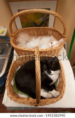 Two kittens in two baskets relaxing overhead scene angle #1492382990