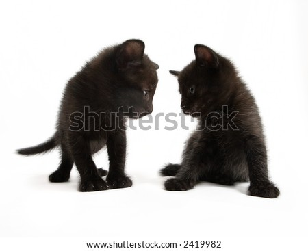 Two kittens look against each other