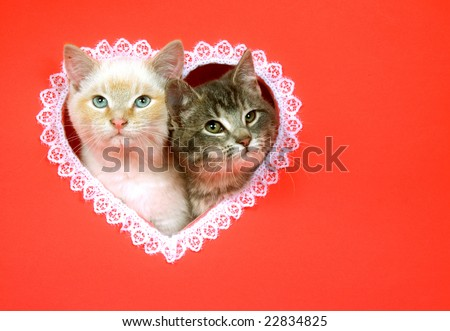 Two kittens peek out of a heart shaped hole cut into a red background for use as valentines day art