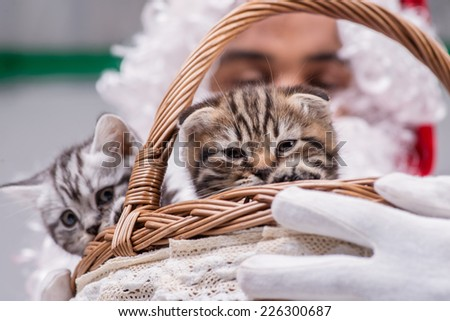 Two kittens peeking out of a Christmas Santa basket until a Santa Claus holding a gift basket with kittens on isolated white background