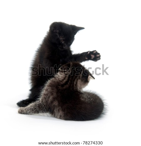 Two kittens playing and fighting on white background - stock photo