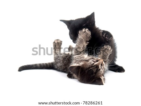 Two kittens playing and fighting on white background