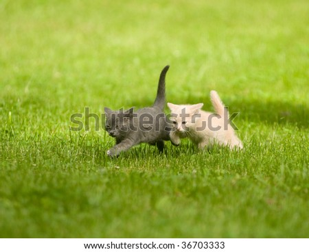 Two kittens running through the grass and playing