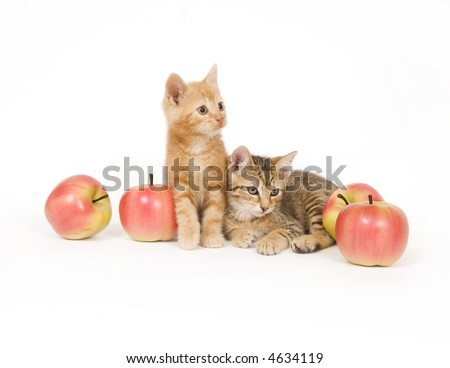 Two kittens sit next to an assortment of artificial apples on white background - stock photo