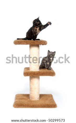 Two kittens sitting on cat tower with white background