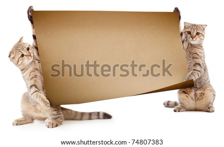 Two kittens with placard or banner for text