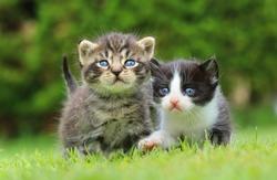 Two kitty siblings
