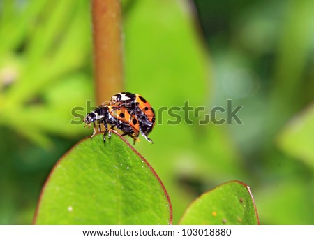 two ladybug on green sheet