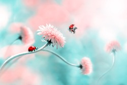 Two ladybugs on a pink spring flower. Flight of an insect. Artistic macro image. Concept spring summer. Free space.