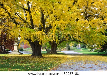 Two Large Colorful Trees With Branches Overhanging A Quiet Cemetery & Arboretum Road In Autumn, Southwestern Ohio, USA