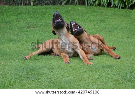 Two laughing dogs