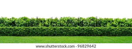 Two layers of green hedge on white background