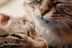 Two lazy pets sleep. Fluffy pussycat and tabby cat close up. Friendship of domestic animals.