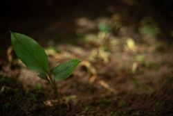 two leaves on the soil