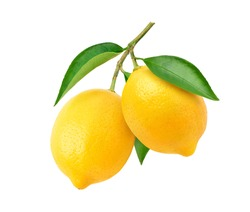 Two Lemon fruits hanging with branch and leaves isolated on white background. Clipping path.